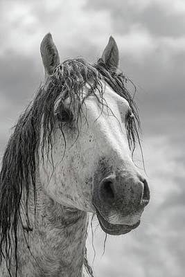 Photograph - Gray Sky Stallion by Kent Keller