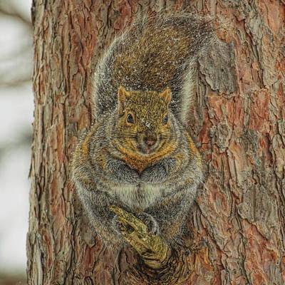 Photograph - Gray Squirrel Portrait by Dale Kauzlaric
