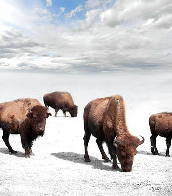 Photograph - Grazing Buffalo by Evie Carrier