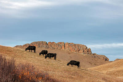 Photograph - Grazing Grandeur by Todd Klassy