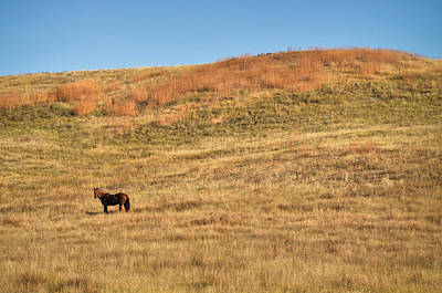Photograph - Grazing In The Grass by Carl Young