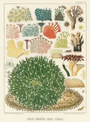 Open Impressionism California Desert - Great Barrier Reef Corals from The Great Barrier Reef of Australia  1893  by William Saville-Kent  1 by Celestial Images