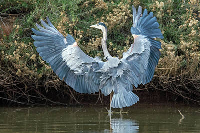 Photograph - Great Blue Heron 4780-121118-1cr by Tam Ryan