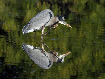 Photograph - Great Blue Heron 9862-111418-1cr by Tam Ryan