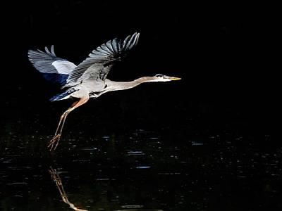 Photograph - Great Blue Heron 9886-111418-1cr by Tam Ryan