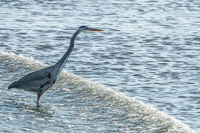 Photograph - Great Blue Heron And Wave by Belinda Greb