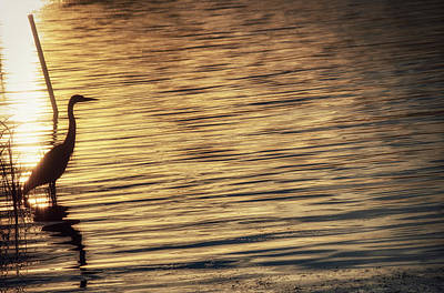 Photograph - Great Blue Heron At Sunset by David Kay