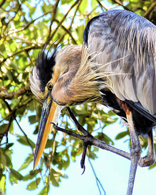 Photograph - Great Blue Heron Close Up by Kerri Farley