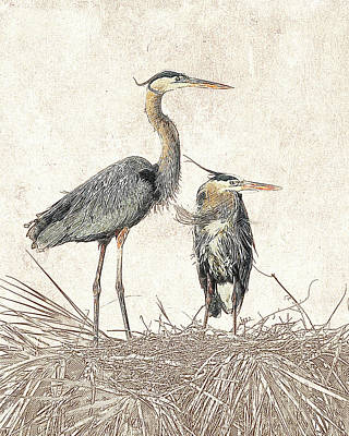 Photograph - Great Blue Heron Couple - Photographic Drawing by Dawn Currie