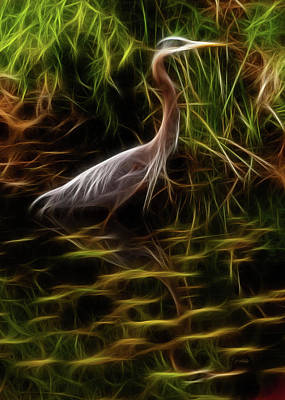 Photograph - Great Blue Heron - Fractal Art by Jordan Blackstone