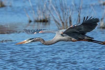 Photograph - Great Blue Heron In Flight Dmsb0152 by Gerry Gantt