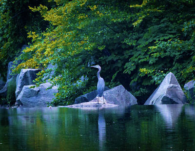 Photograph - Great Blue Heron On Cameron Run by Lora J Wilson