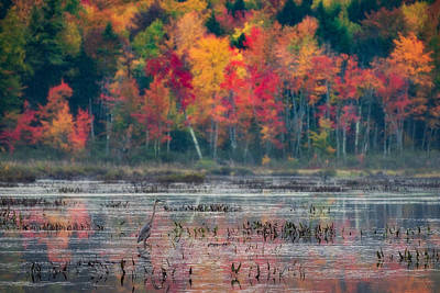 Photograph - Great Blue Heron On Loon Lake by Brad Wenskoski