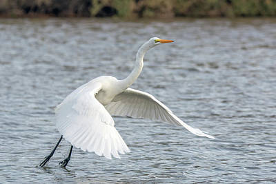 Photograph - Great Egret 9515-123118-1 by Tam Ryan