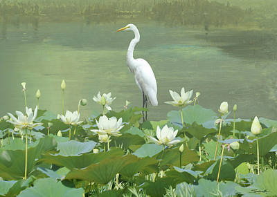 Digital Art - Great Egret And Lotus Flowers by M Spadecaller