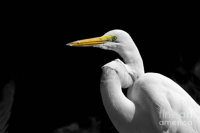 Abstract Skyline Rights Managed Images -  Great Egret - Ardea alba Royalty-Free Image by Stefano Senise