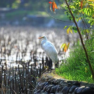 Botanical Photograph - Great Egret Bird by Alexandery Www.flickr.com/photos/alexyo1968/