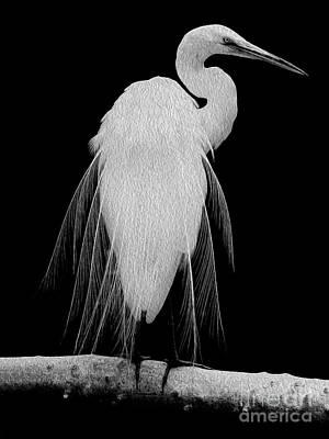 Digital Art - Great Egret In Full Bloom I - L by Kenneth Montgomery