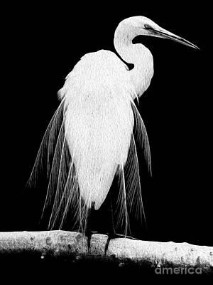 Digital Art - Great Egret In Full Bloom I - L by Kenneth Montgomery