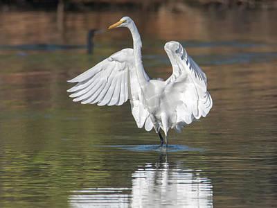 Photograph - Great Egret Landing 8206-110418-1cr by Tam Ryan