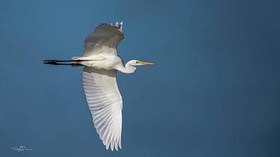 Photograph - Great Egret's Flight by Torbjorn Swenelius