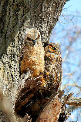 Photograph - Great Horned Owl Family by Sheila Skogen