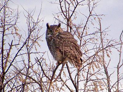 Photograph - Great-horned Owl by Luke Miller