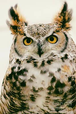 Photograph - Great Horned Owl Profile by Sheila Skogen