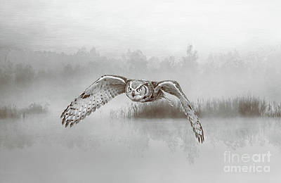 Great Horned Owl Wall Art - Photograph - Great Horned Owl Soars Bw by Laura D Young
