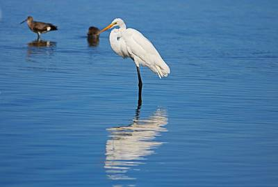 Photograph - Great White Egret At Ding I by Michiale Schneider