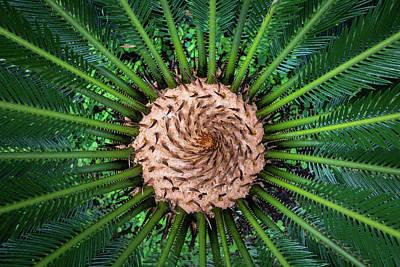 Photograph - Green Abstract Series No.9 by Juan Contreras