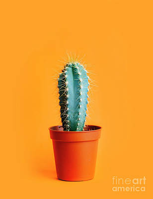 Photograph - Green Cactus In Decor Pot Over Bright Orange Pastel Background.  by Jelena Jovanovic