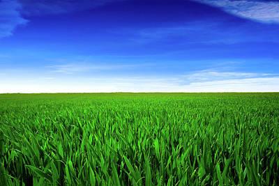 Photograph - Green Fields by Duncan1890