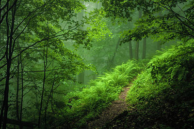 Mountain Royalty-Free and Rights-Managed Images - Green Forest by Evgeni Dinev