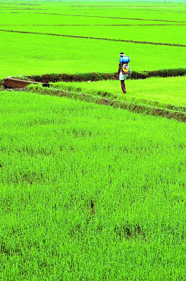 Kerala Photograph - Green Grass Earth Paddy Kerala by Anoop Negi