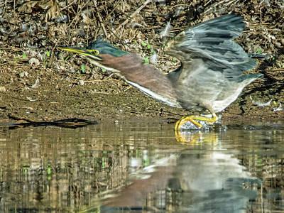 Photograph - Green Heron 4852-102018-1cr by Tam Ryan