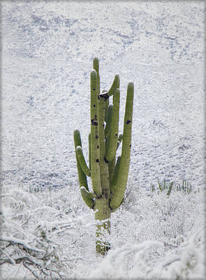 Photograph - Green In A Sea Of White by Elaine Malott