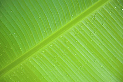 Photograph - Green Leaf Markings IIi by Helen Northcott