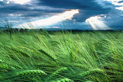 Photograph - Green Ocean by Evgeni Dinev