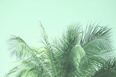 Kristian Gallagher Royalty-Free and Rights-Managed Images - Green Palm by Kristian Gallagher