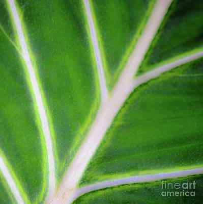 Photograph - Green Plants And Leaves by D Davila