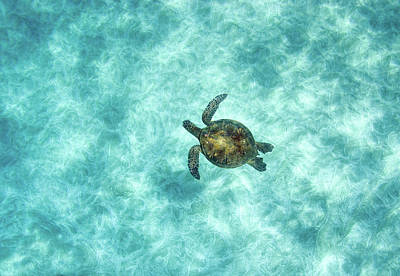 Photograph - Green Sea Turtle In Under Water by M.m. Sweet