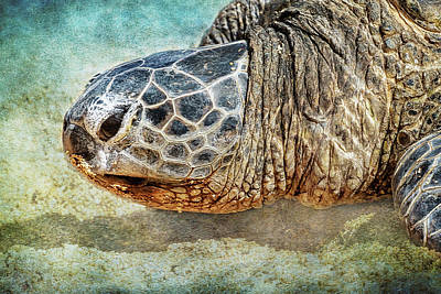 Photograph - Green Sea Turtle Portrait by Belinda Greb