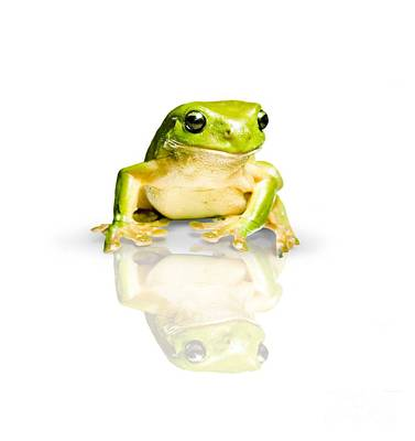 Photograph - Green Tree Frog by Jorgo Photography - Wall Art Gallery