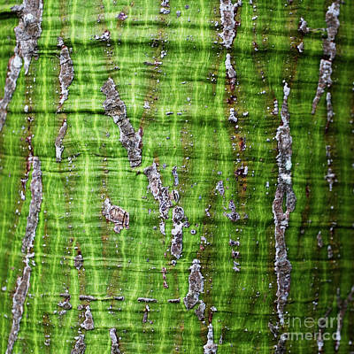 Photograph - Green Tree Trunk Surface - Organic Patterns And Textures by Charmian Vistaunet