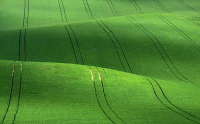 Photograph - Green Velvet by Vlad Sokolovsky
