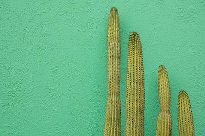 Tranquility Photograph - Green Wall And Cactus by Joanna Mccarthy