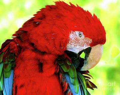 Green-winged Macaw Art Print