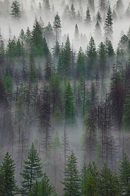 Photograph - Green Yosemite by Jon Glaser