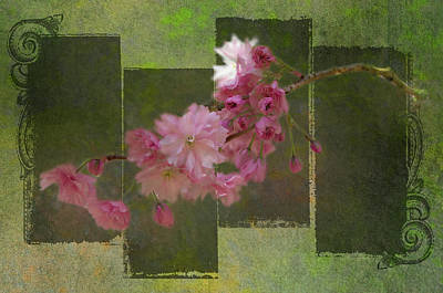 Photograph - Romantic Blossoms 7 by Marilyn Wilson